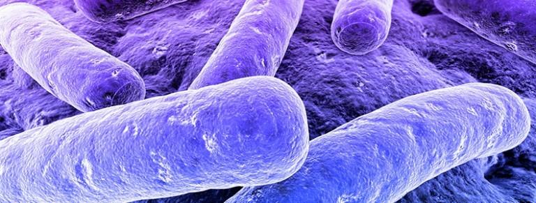 legionella-bacteria-blog-768x291 BUENO