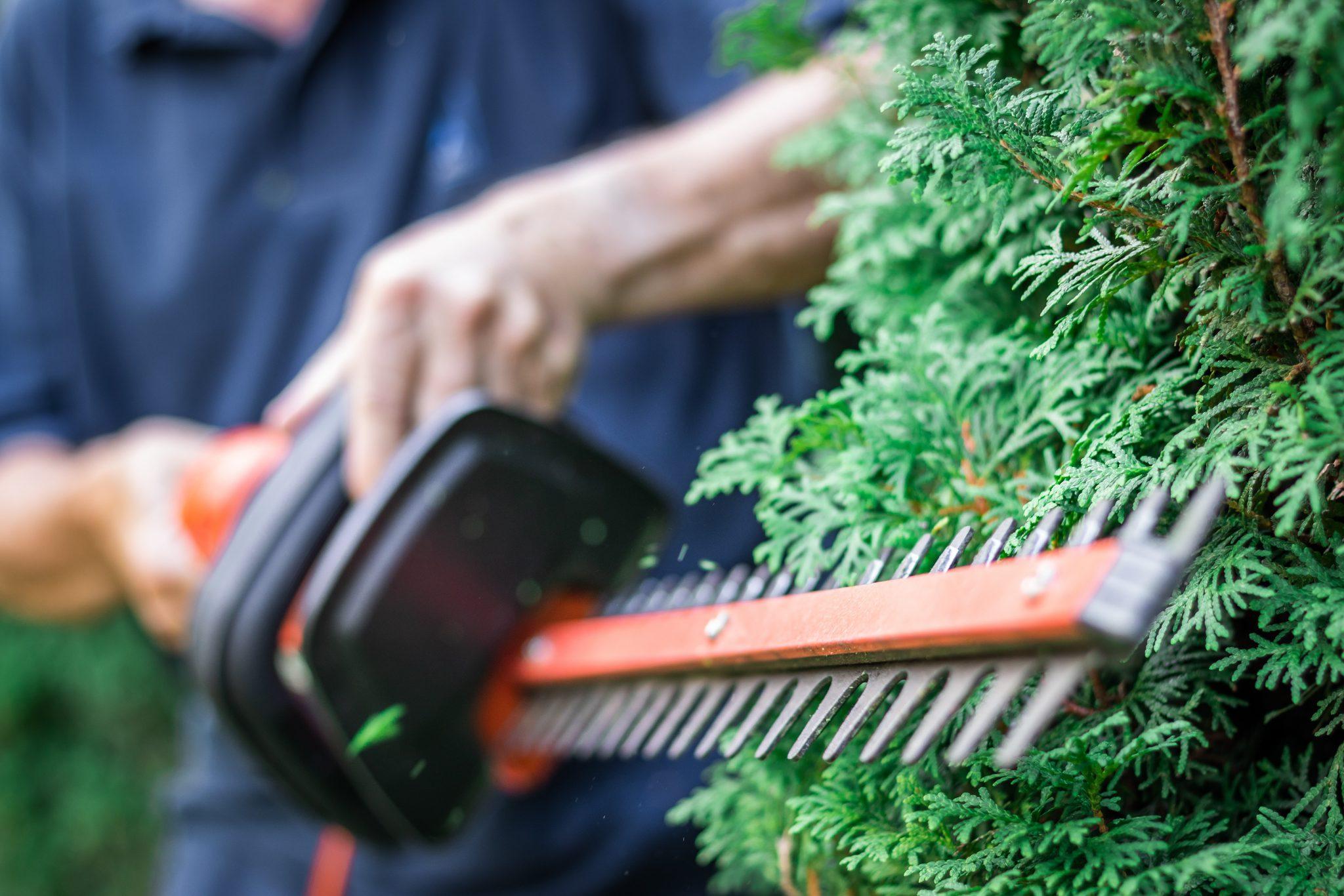 Curso Mantenimiento y Mejora de Jardines y Zonas Verdes